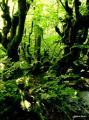 arbre extraordinaire qui nous invite au rêve et à la méditation