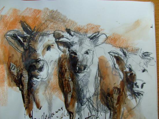 dessins vaches nus aquarelles paysages toul choloy