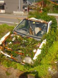 Quand la nature reprend ses droits... - Shikoku