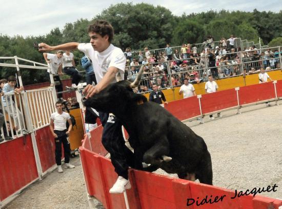 2ème vache sur Simon Challut