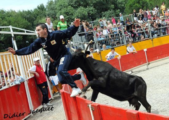 3ème vache sur Fabrice Gizard
