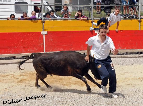 4ème vache sur Benjamin Monnier