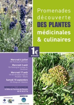 Plantes médicinales et culinaires