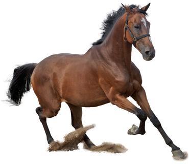 Faire du cheval dans le sud de la France
