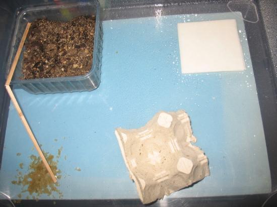 elevage de grillons pour reptiles