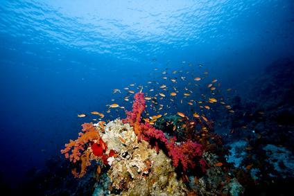 Préparer une randonnée subaquatique