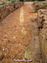Vue vers le nord d'une tranchée longue et étroite et de fosses de plantation, dans la plantation 5, au lieu-dit Mas d'en Ramis de Banyuls-dels-Aspres. Au premier plan, la tranchée n'apparaît plus, parce qu'elle a été arasée par le décapage, alors qu'on distingue nettement les fosses de plantation, légèrement surcreusées.  © J. Kotarba, Inrap