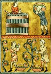 1180, vignerons et travail de la vigne, Psautier Normandie La Haye.