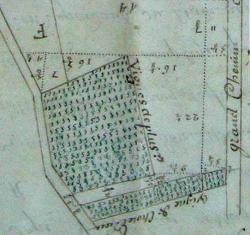 Les vignes des Nivelles représentées sur un mesurage figuré de 1742.  © Arch. Dép. Seine-et-Marne, 20Hdt B4
