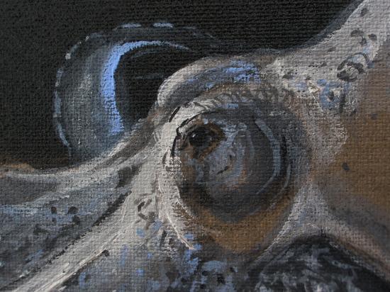 La pieuvre détail : l'oeil; juillet 2011; format 60 x 70 acrylique sur lin de Madrdid.