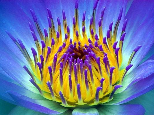 Initiation energie des fleurs et fleurs eth riques for Fleurs internet