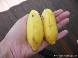 Bananes figues