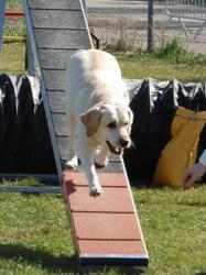 Phoebe, type Labrador à Murielle