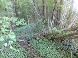 bois du Mellier:restes de voie amputée
