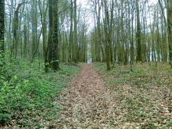 """chemin""""piérré""""central, centre vers Haut"""