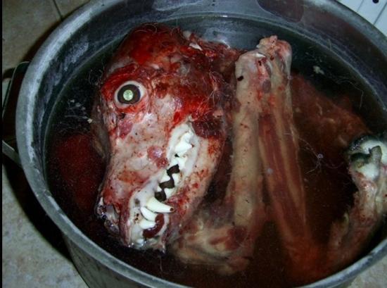 chien tuer decoupé manger insolite incroyable mais vrai