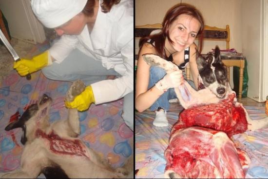 avreux monstre histoire incroyable télé emission attaque de chien