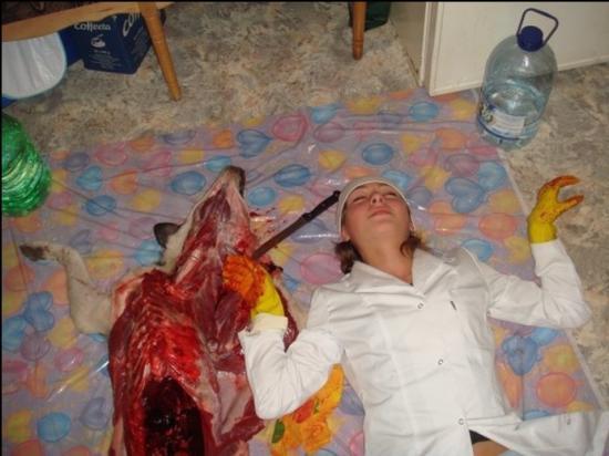 chien mort tue mange animal