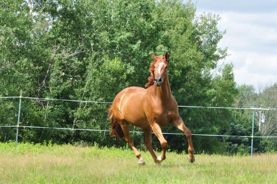 pension int u00e9rieur et ext u00e9rieur pour chevaux
