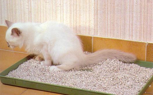 litiere chat pour hamster