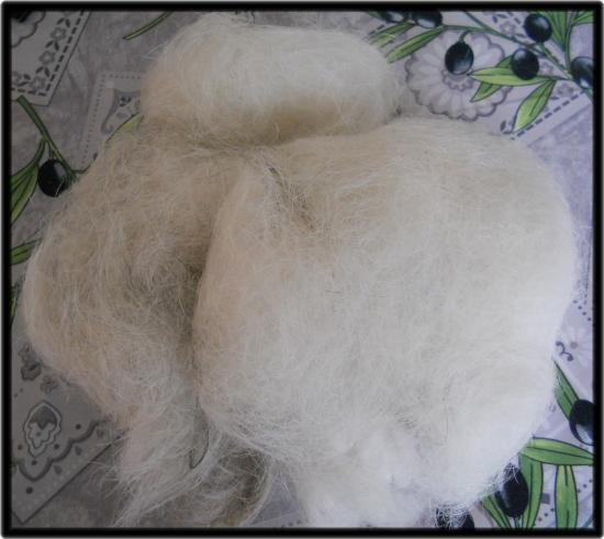 Poils après épilation sur Parson Russell Terrier, Aboiezen, toiletteuse à domicile calvados.