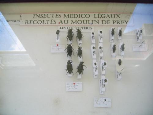Insectes Médicaux Légaux du Carton à Insectes d'AMB Proprièté Exclusive du Moulin de Prey.org