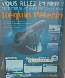 Affiche du requin pèlerin au club de voile.