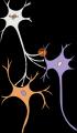 Relation entre les neurones