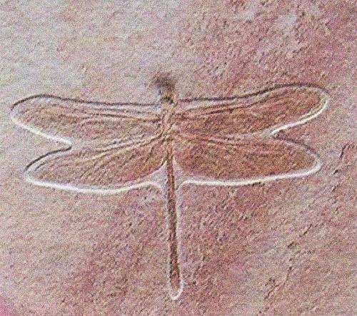 Insectes et Arthropodes dans la préhistoire photo Rachel Krohner avec ses remerciements 2011