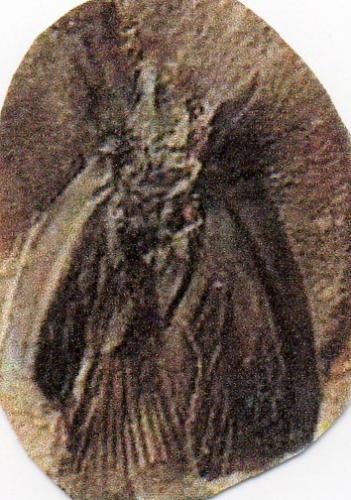 Insectes et Arthropode de la préhistoire photo Rachel Krohner avec ses remerciements 2011