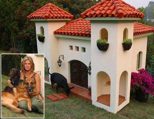 chien,chat,attrapé,attaque,animaux,animal,cabane,petite,maison,insolite,etrange,incroyable,genial,