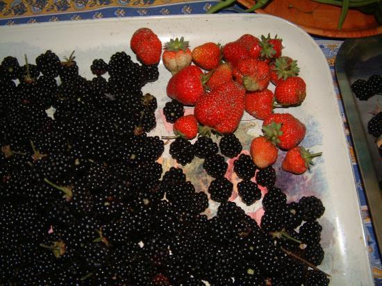 Mûres et fraises
