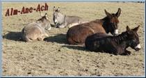 Alm-Âne-Ach éducation et comportements de l'âne
