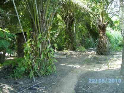 une piste dans la palmeraie