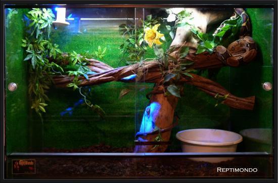 decor terrarium python