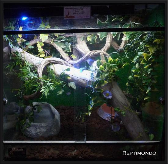 photo decor terrarium guttata