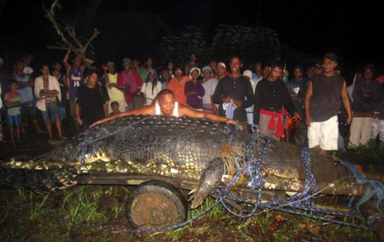 Cryptozoologie cryptozoology sea monster crcodile capturé vivant aux Philippines Cox Elorde septembre 2011 saurien géant reptile zoologie Bunawan township Agusan del Sur Province