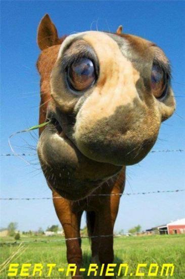Un cheval (ou pas)