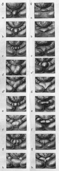 Sexage au cloaque - Page 2 Types_diagrams