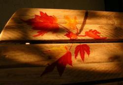 Erable d'automne