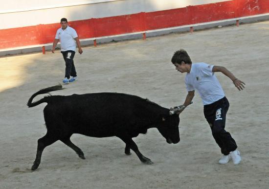 Vache N° 760 sur Simon Challut