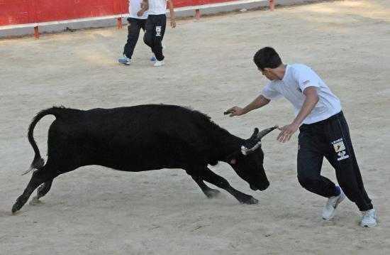 Vache N° 760 sur Rémi Chevalier