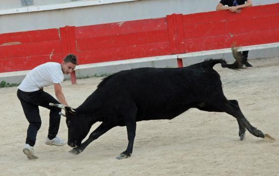 Vache N° 760 sur Clément Collavoli