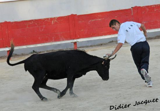Vache N° 881 sur Gaëtan Ranc