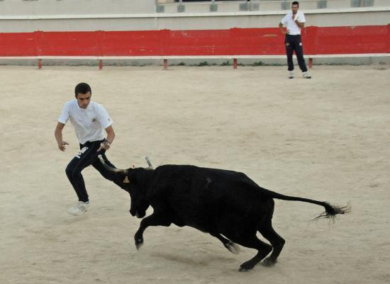 Vache N° 753 sur David Guerrero