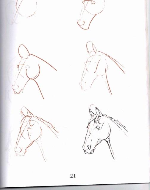 Apprendre dessiner - Dessin facile de cheval ...