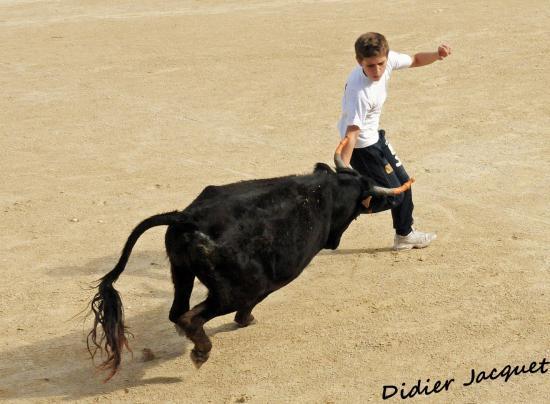 Lucas Lopez et le petit veau