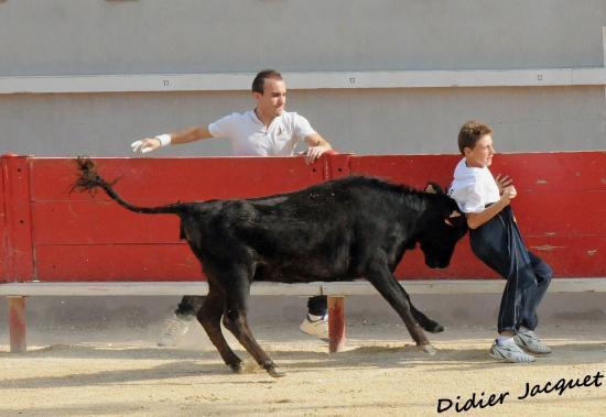 Lorenzo Billegas coincé par le petit veau