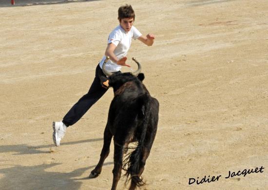 Dany Manzano face à la vache