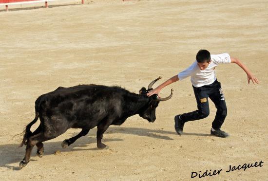 Rémi Ramirez face à la vache